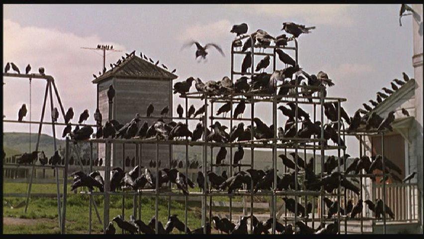 """Blackbirds in Alfred Hitchcock's """"Birds"""""""