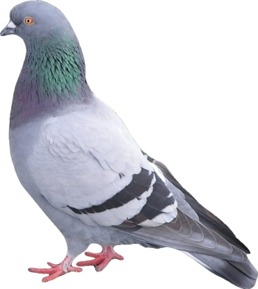 One Power Plant Pigeon